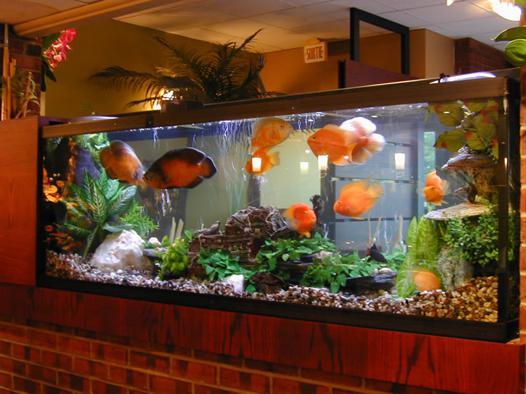acheter aquarium occasion