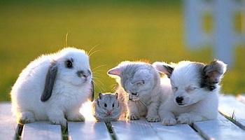 animaux le bon coin