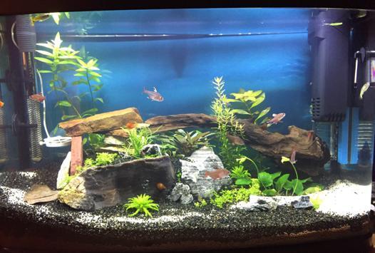 aquariophilie decor