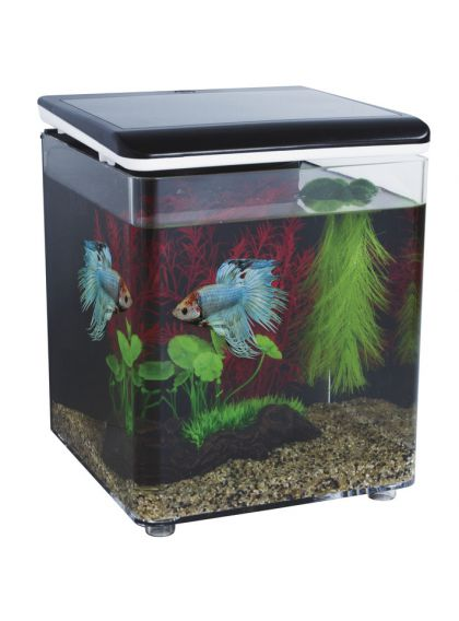 aquarium betta pas cher