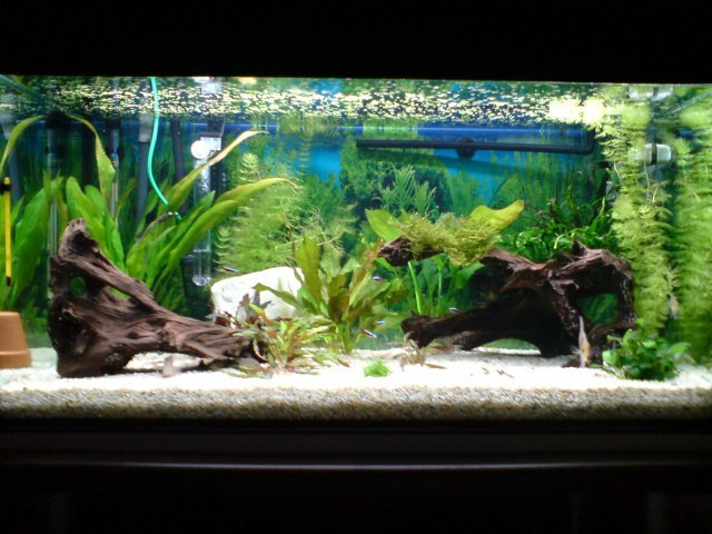 aquarium d'eau chaude
