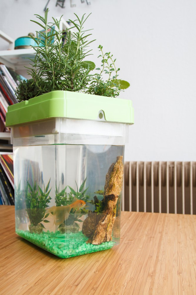 aquarium hydroponique