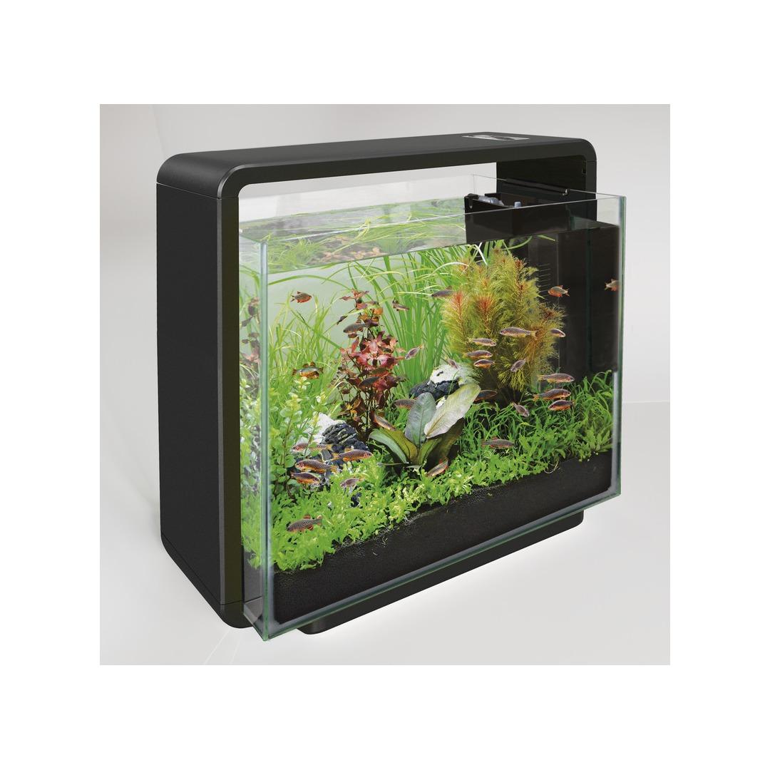 aquarium noir