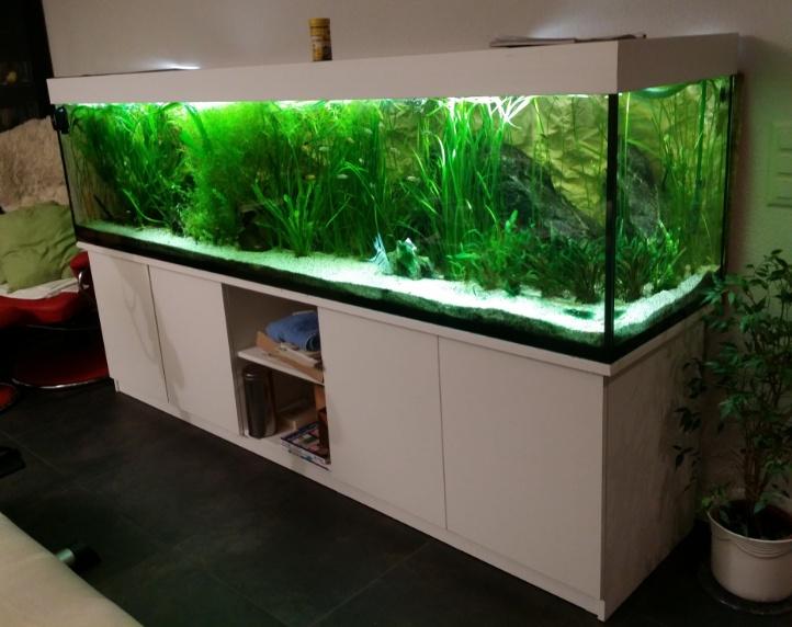 aquarium occasion