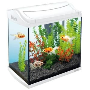 aquarium pas cher