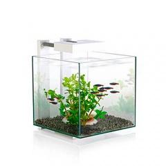 aquarium petite taille