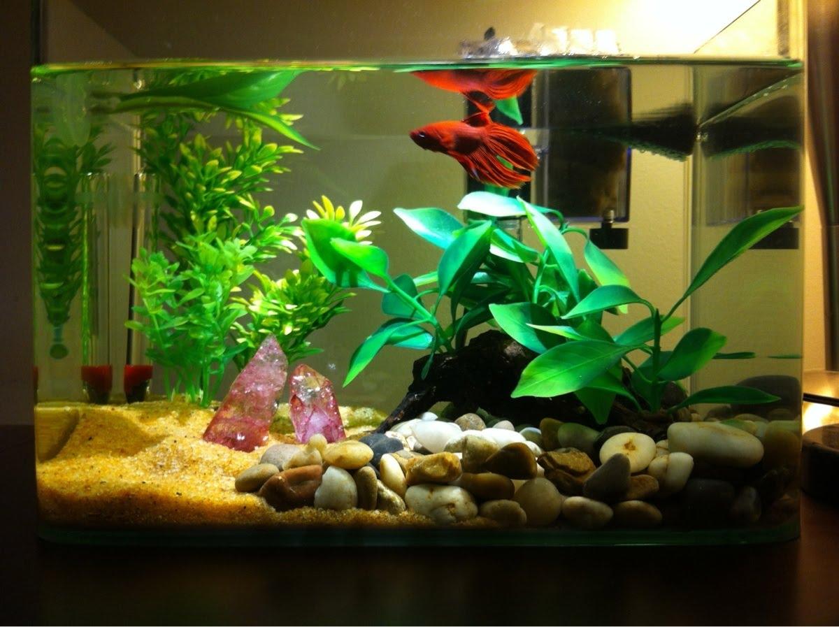 aquarium simple