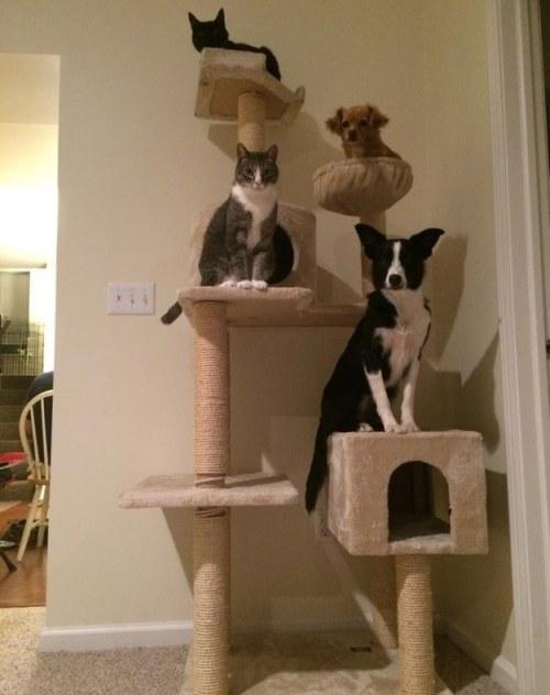 arbre a chat pour 2 chats
