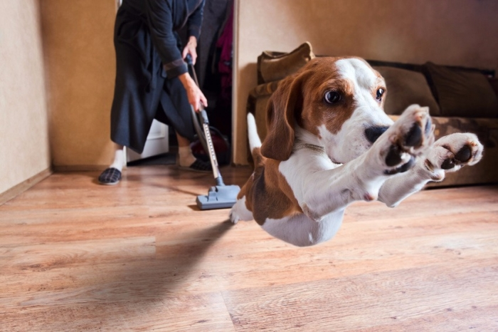 aspirateur chien