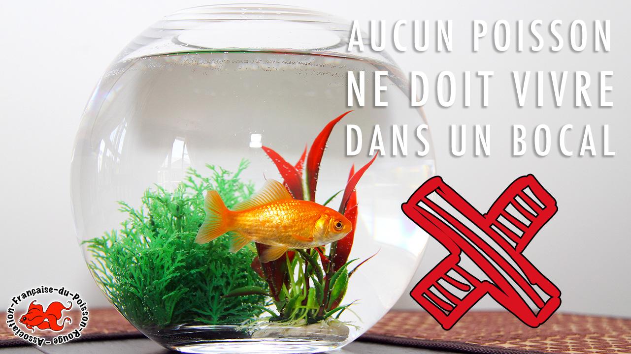 bocal pour poisson