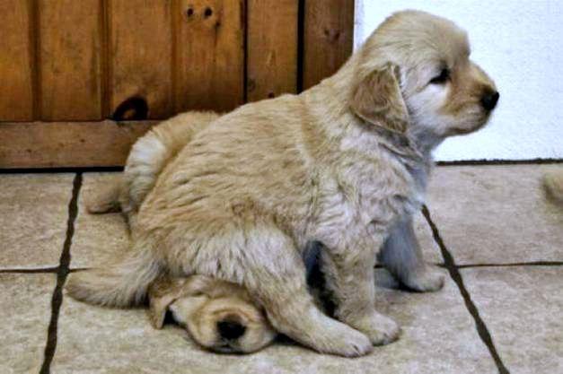 bon coin de chien