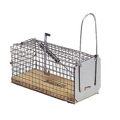cage attrape souris