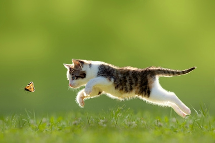 chasser un chat