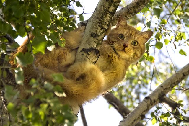 chat arbre