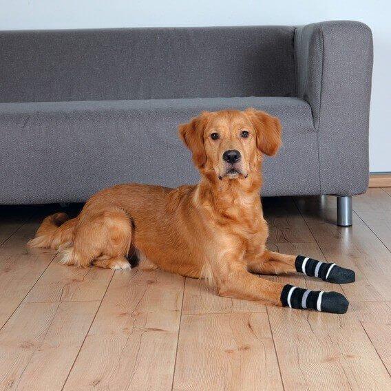 chaussettes antidérapantes pour grand chien