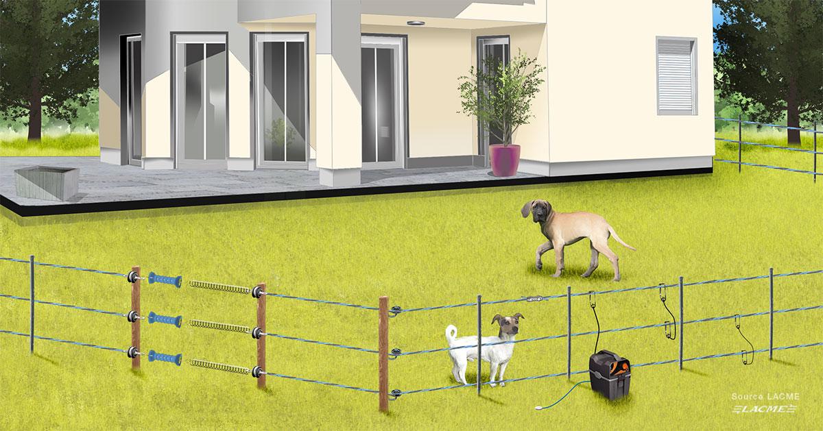cloture chien electrique