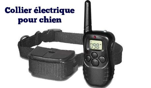 collier chien electrique