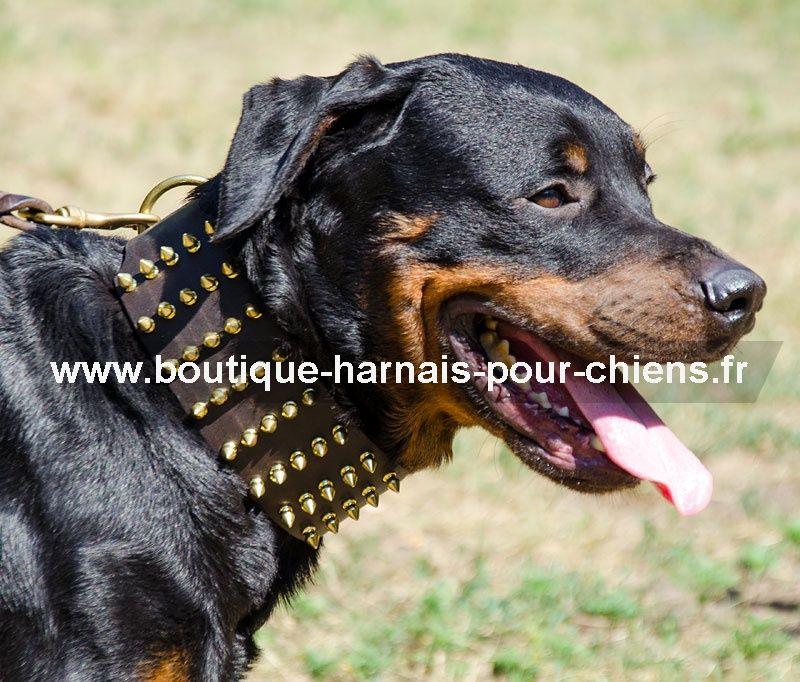 collier rottweiler gros chien