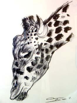 croquis girafe