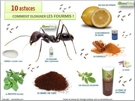 éliminer les fourmis