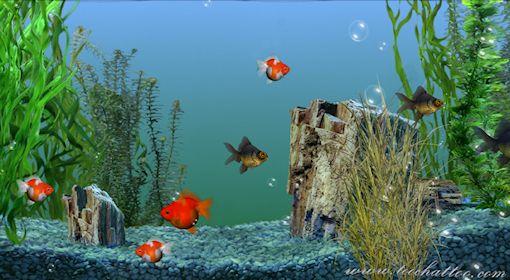 fond ecran gratuit aquarium