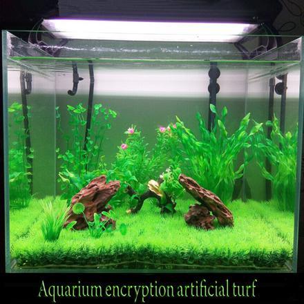 gazon pour aquarium