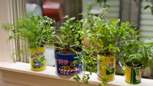 herbes aromatiques intérieur