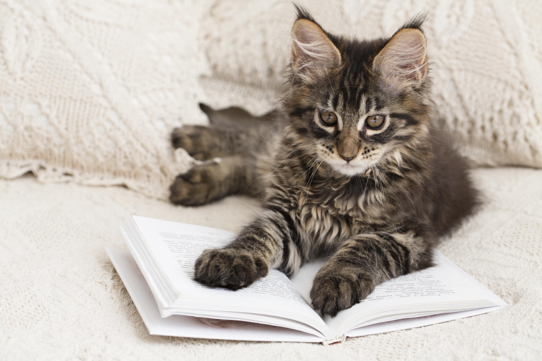intelligence du chat