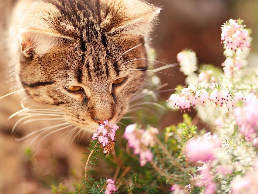 odeur que les chats aiment