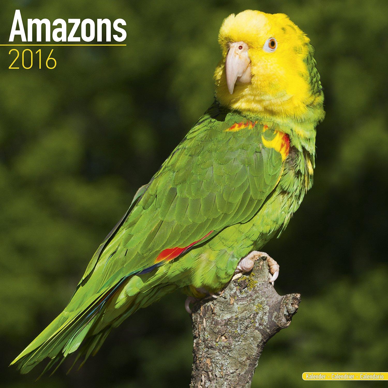 parrot amazon