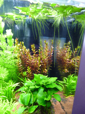 plante surface aquarium