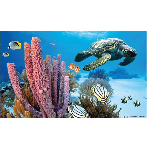 poster pour aquarium