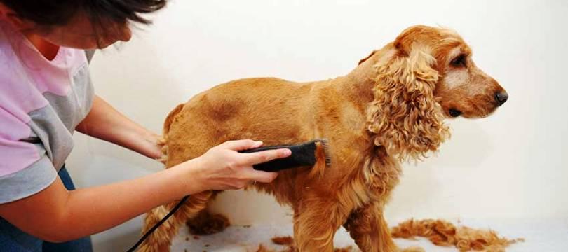 quelle tondeuse pour chien choisir