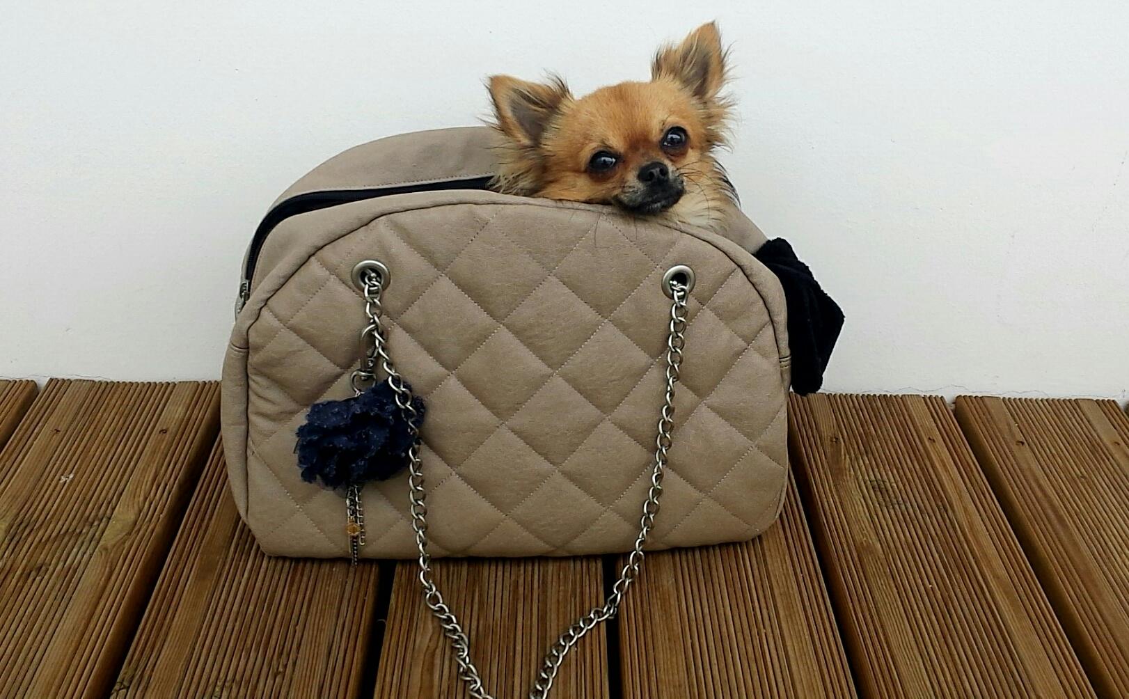 sac a main pour chien chihuahua