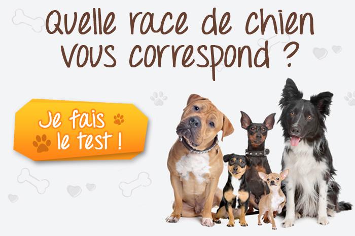 test chien