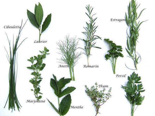 toutes les plantes aromatiques